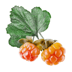 Cloudberry extract