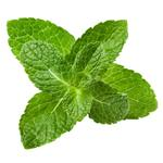 Peppermint leaf (Mentha Piperita Leaf)