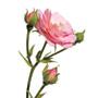 Damaszkusz rózsa